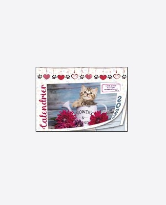 """Calendriers 12 pages """" chat - chien """""""